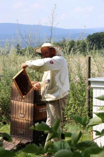 pszczelarz przy butiku hotelowym